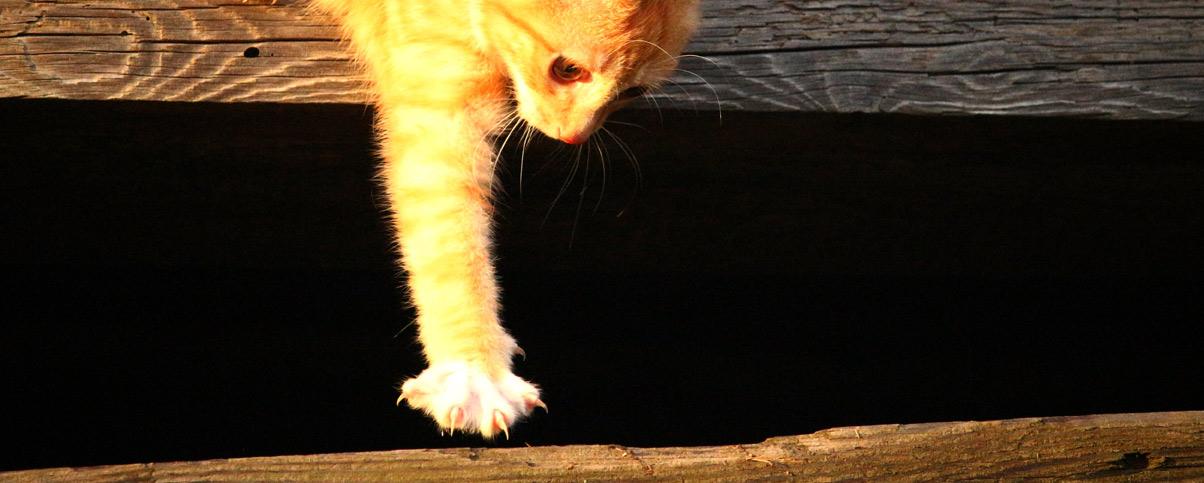 D griffage des chats clinique v t rinaire ve woods lavoie - Quand peut on couper les griffes d un chaton ...